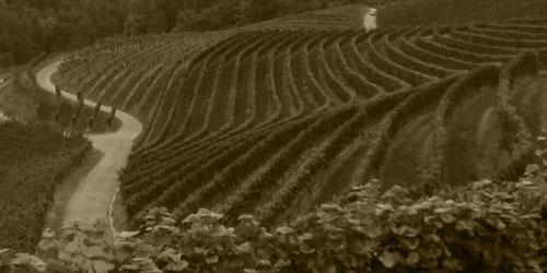 Nach der Flurbereinigung (nach 1965) in Renchen/Ulm kam der Weinbau durch ALFRED MEIER in unsere Familie